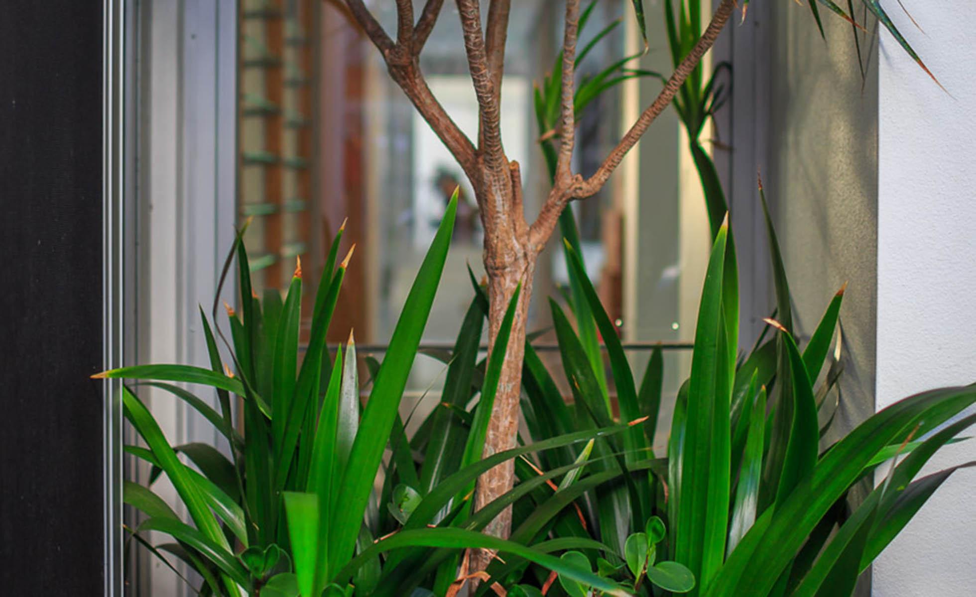 plants-view