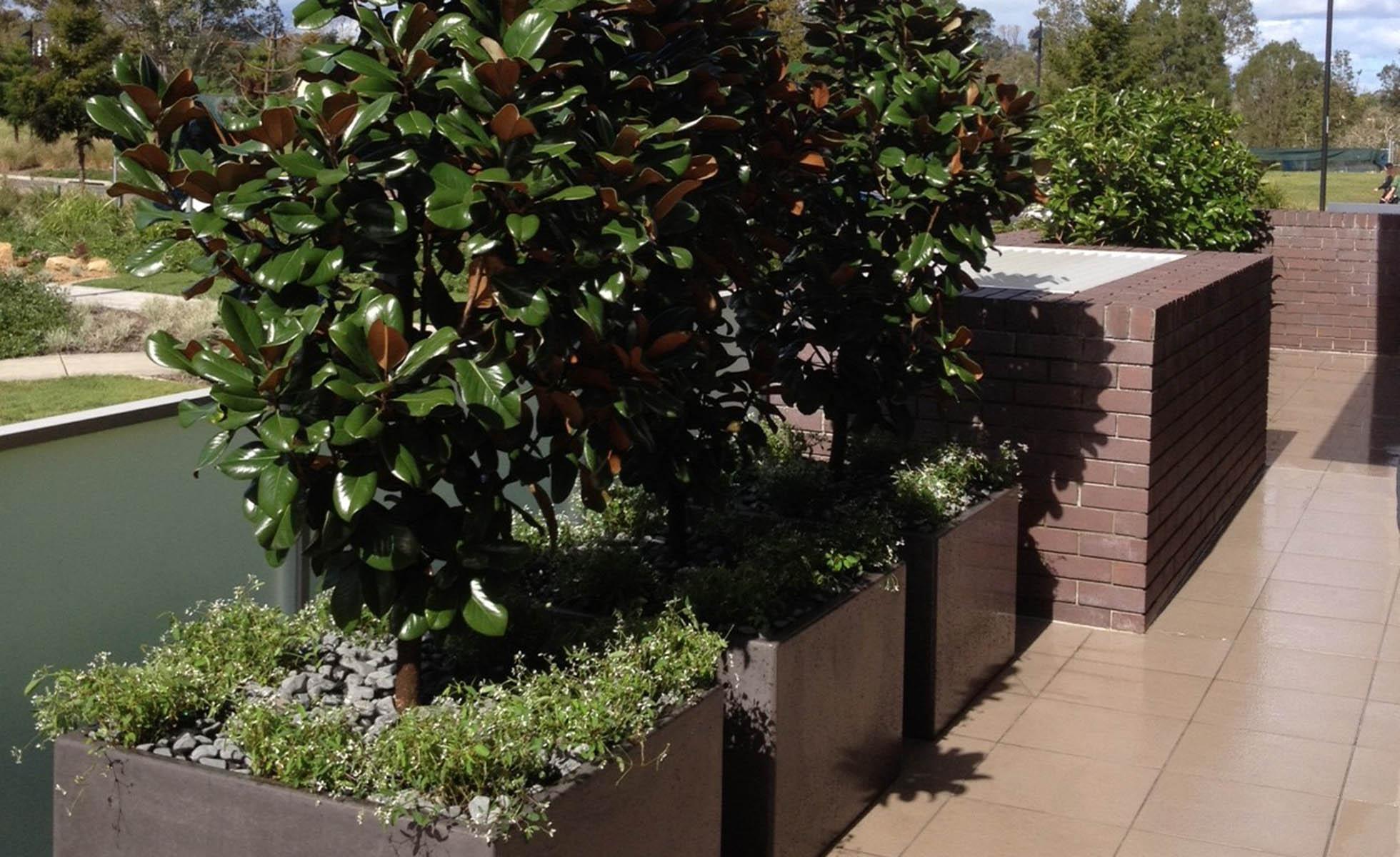 row-plants