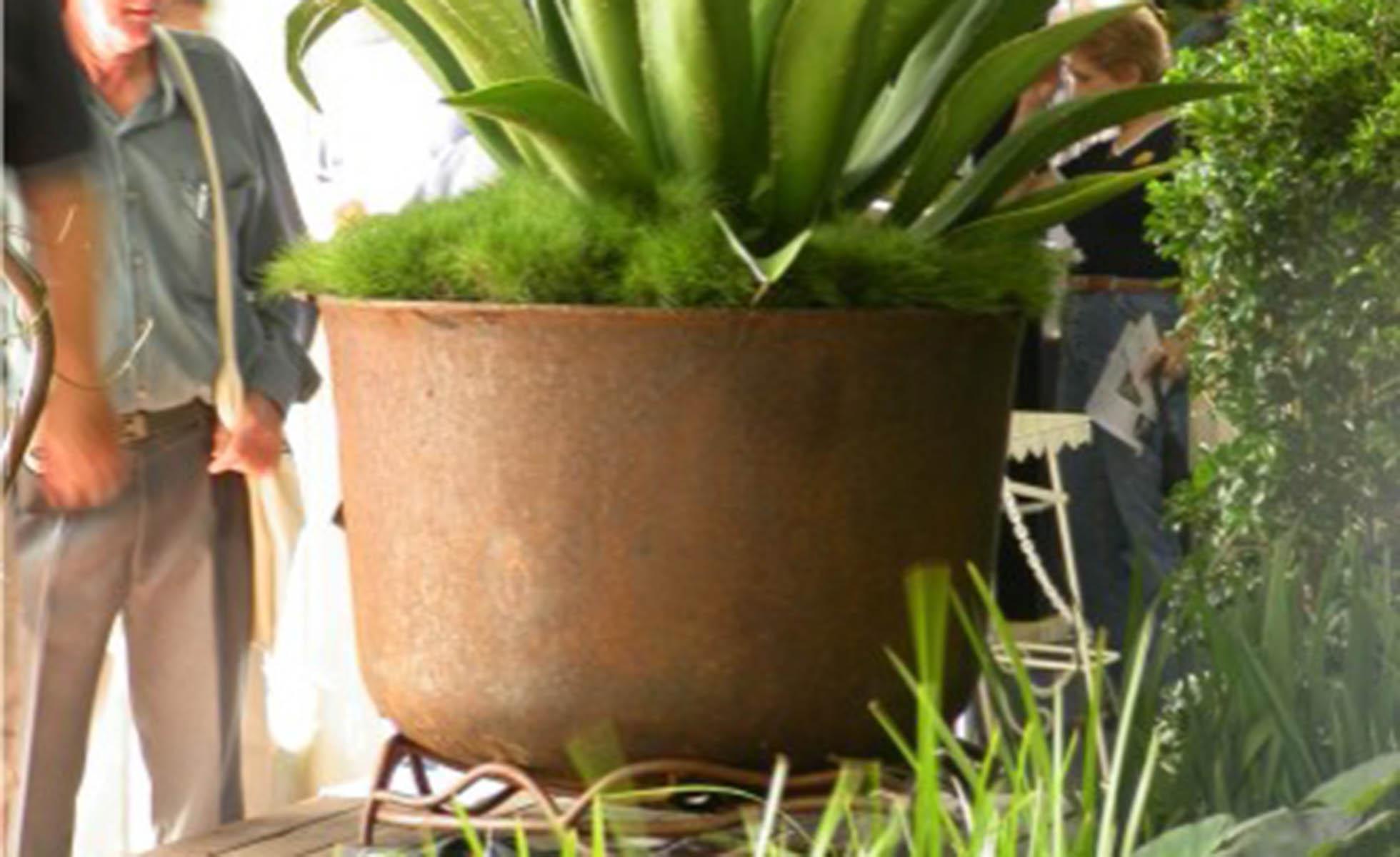 solo-plant