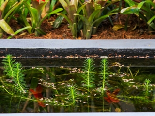water-features-fish-pond-zoom